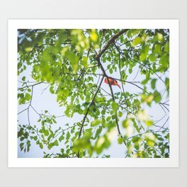 Song from Above Art Print