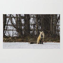 Beautiful Red Fox - No. 4 Rug