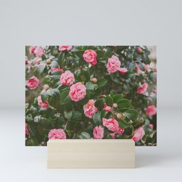 Pink Camellias Mini Art Print