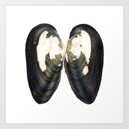 Thick Shelled River Mussel (Unio crassus) Art Print