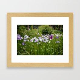 Field of Japanese Irises Framed Art Print