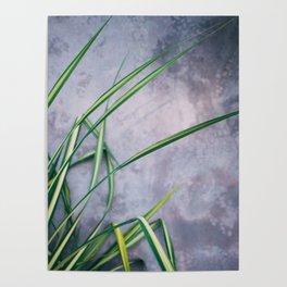 Palm Palette Poster