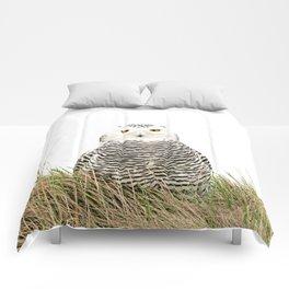 Hedwig Comforters