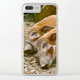 Red River Hogs taking a nap Clear iPhone Case