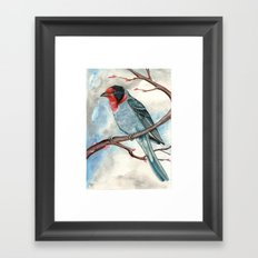 Red Faced Warbler Framed Art Print