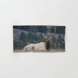 Elk with one antler in Jasper National Park | Canada Hand & Bath Towel