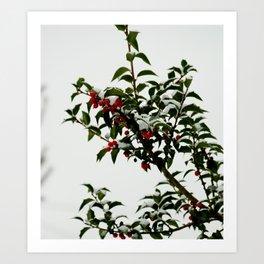 Snow-Kissed Holly Art Print