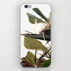 Bird of Paradise iPhone & iPod Skin