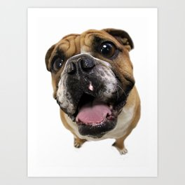 British Bulldog Art Print