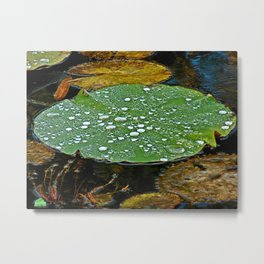 Laundered Lily Pad Metal Print