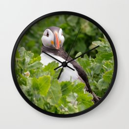 Wildlife ocean puffin birds portrait Wall Clock