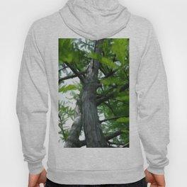 Cypress Hoody