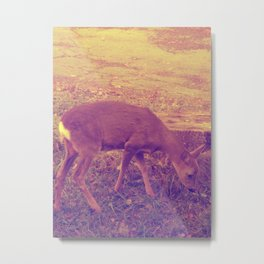Deer || Metal Print