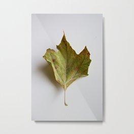 Dry leaf Metal Print