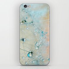 dandelion blue III iPhone Skin