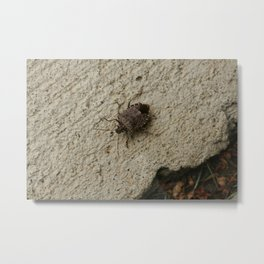 Stinkbug Catch and Release (Photography: Critters and Creatures) Metal Print