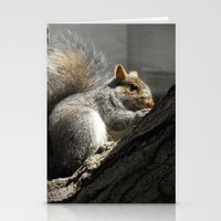 squirrel Stationery Cards featuring Squirrel by Mandy Becker