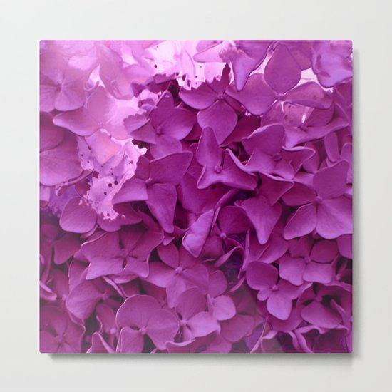 through the purple hydrangea Metal Print
