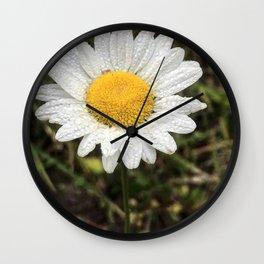 An English Daisy in Oregon Wall Clock