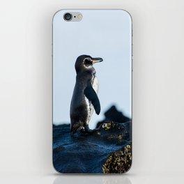 Galapagos Penguin on the Rocks iPhone Skin