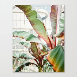 Botanical photography | Green tropical plants in the botanical garden of Dublin | Green / red Canvas Print