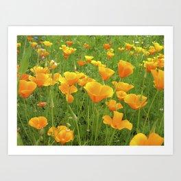 california poppy VI Art Print