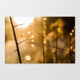 Warm Winter Light Canvas Print