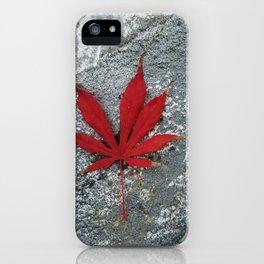 Japanese maple leaf on Rock iPhone Case