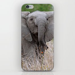 Young elephant - Africa wildlife iPhone Skin