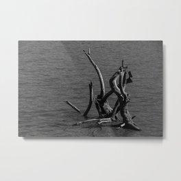 Dead Tree In Water Metal Print