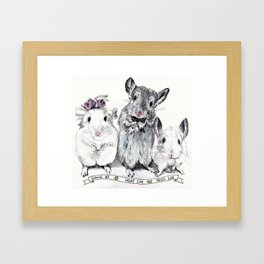 A family of Chinchilla Framed Art Print