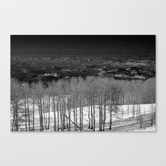 Birch Tree Stand in Utah Canvas Print