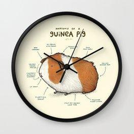Anatomy of a Guinea Pig Wall Clock