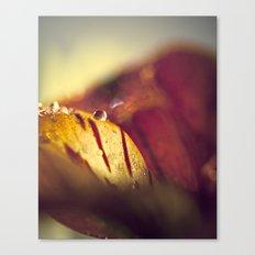 jewel Canvas Print
