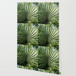 Fan Palm Wallpaper
