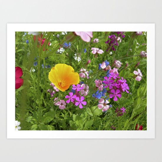 wildflowers meadow II Art Print
