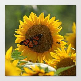 The butterfly the bee and the sunflower Canvas Print