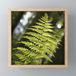 fern in the light, in the Tyrolean Forest, color photo Framed Mini Art Print