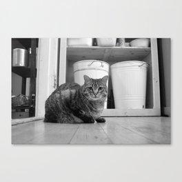 Cat n Trash Canvas Print