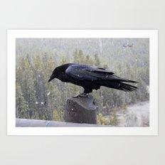 Raven of Yellowstone Art Print