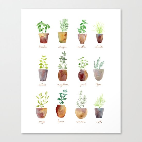 Culinary Herbs Canvas Print