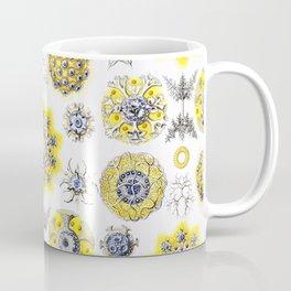 Ernst Haeckel - Polycyttaria Coffee Mug