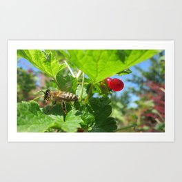 Caught on the Fly Art Print