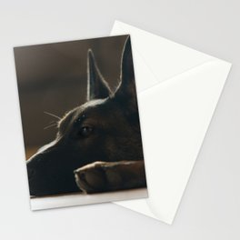 Play break of a Malinois Stationery Cards