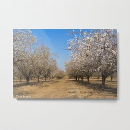Almond Tree Orchard Metal Print