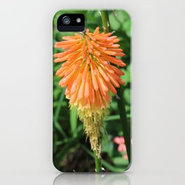 Flowers at The Sky Garden, London, 20 Fenchurch Street iPhone Case