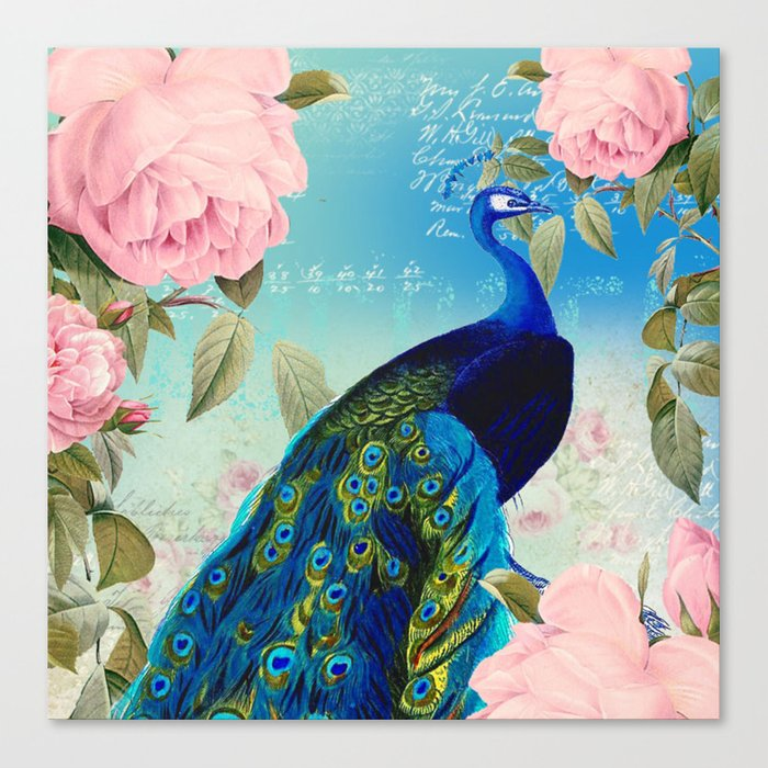 Peacock & Pink Roses  Canvas Print