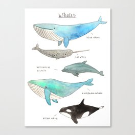 Whale collection Canvas Print