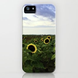 Sunflower Row iPhone Case