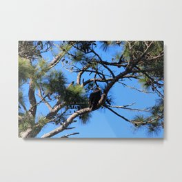 Bald Eagle Baby Metal Print